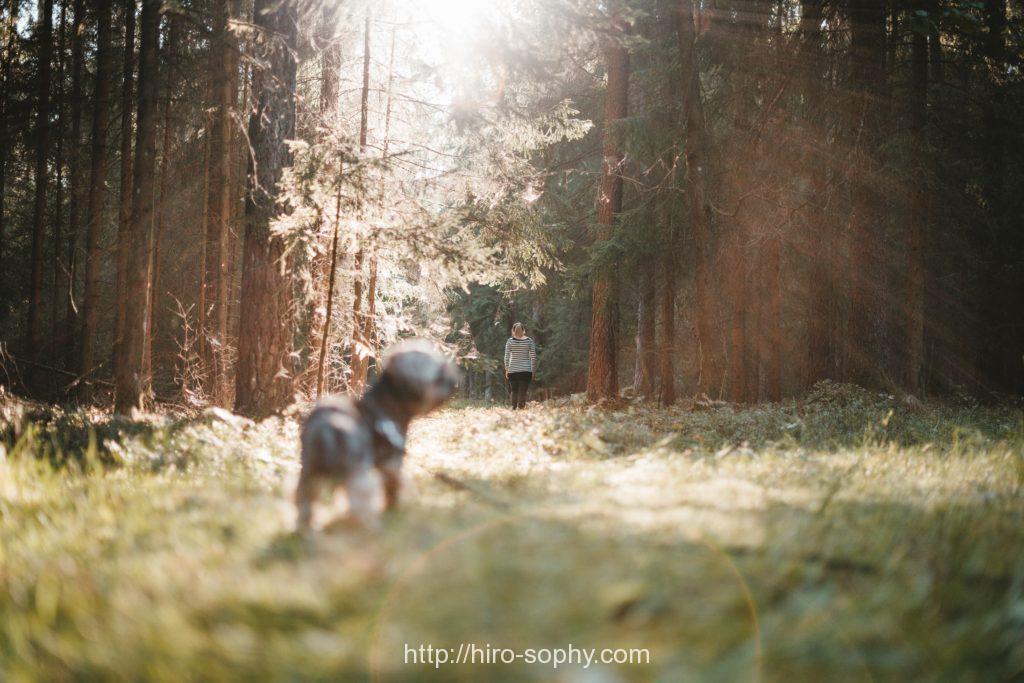 犬と女性が森林を歩く