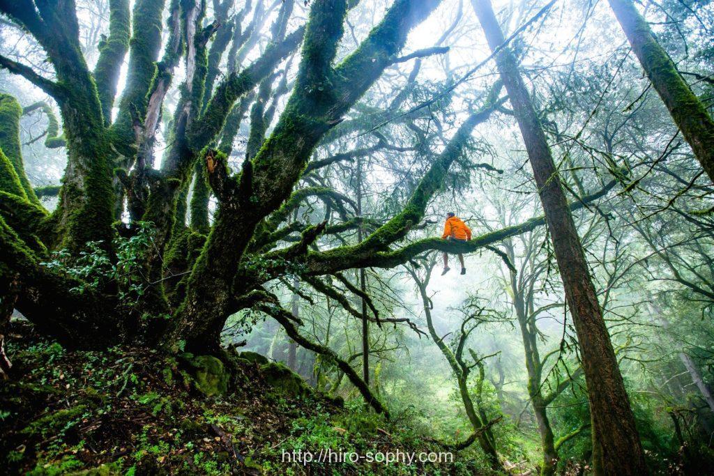 森の木に座るオレンジのパーカーを着た男