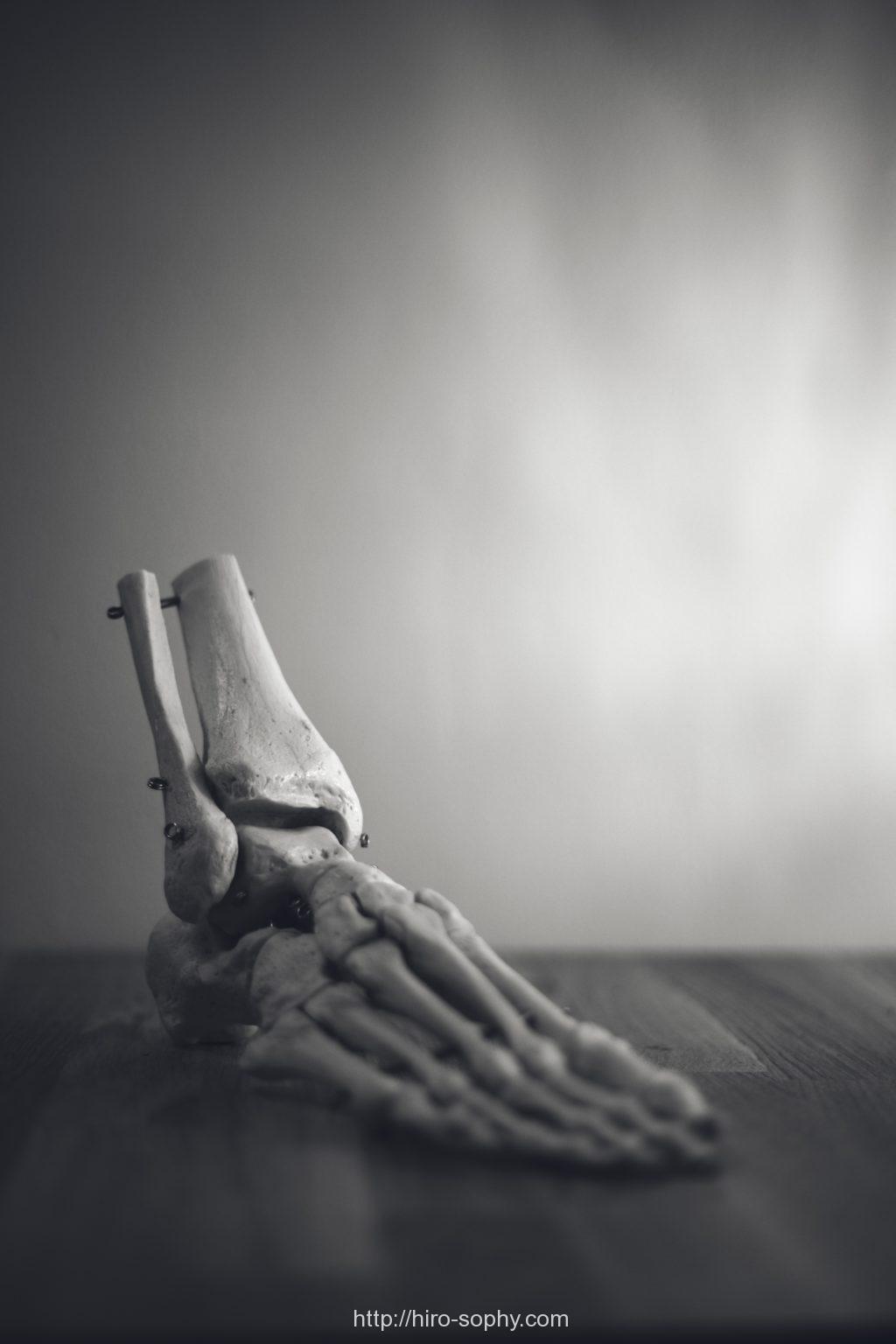 足首の骨格標本