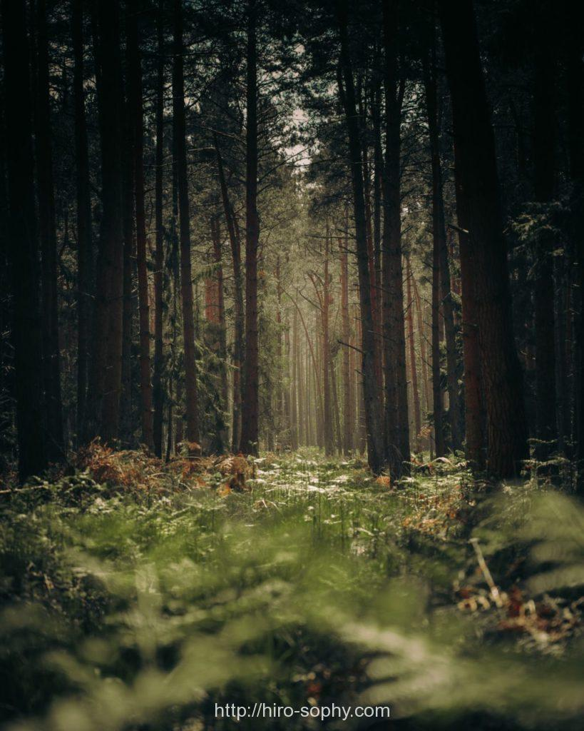 オークの森